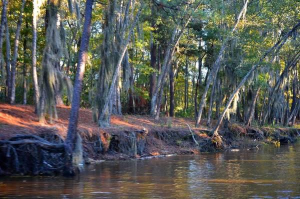 Photograph - Caddo Lake 34 by Ricardo J Ruiz de Porras