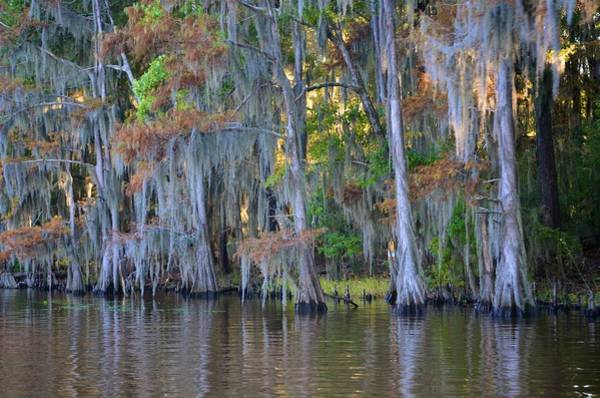 Photograph - Caddo Lake 37 by Ricardo J Ruiz de Porras