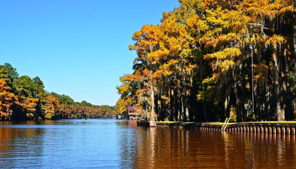 Photograph - Caddo Lake 38 by Ricardo J Ruiz de Porras
