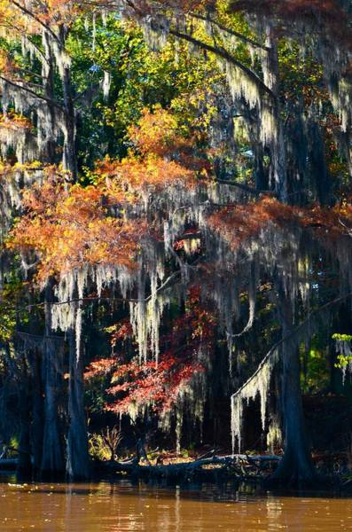 Photograph - Caddo Lake 40 by Ricardo J Ruiz de Porras