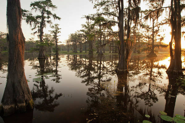 Bald Cypress Wall Art - Photograph - Caddo Lake, Texas At Sunrise by Larry Ditto