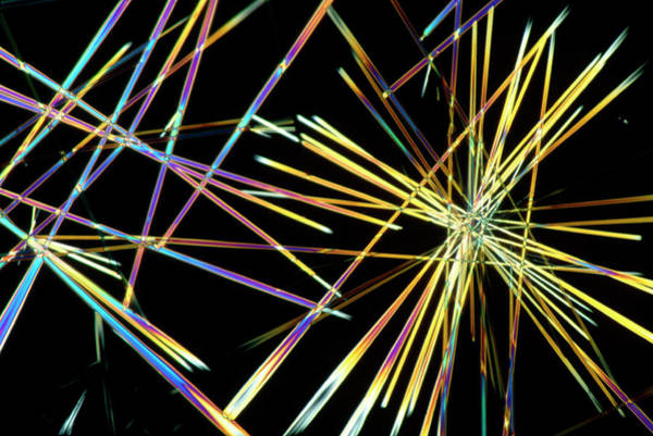 Wall Art - Photograph - Caffeine Crystals by Sinclair Stammers/science Photo Library