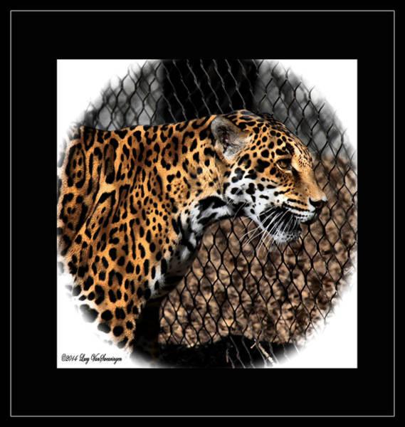 Caged Jaguar Art Print