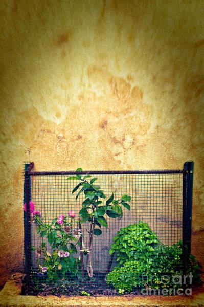 Wall Art - Photograph - Caged by Silvia Ganora