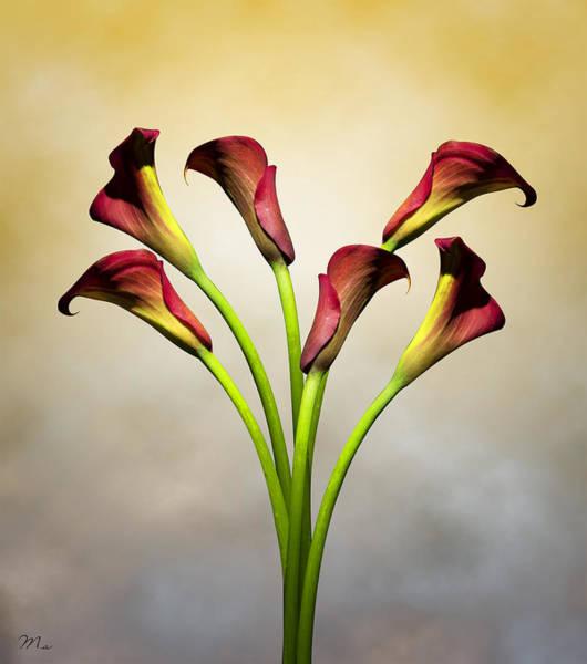Lily Photograph - Cala Lily 5 by Mark Ashkenazi
