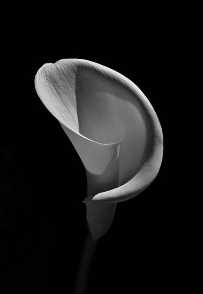 Photograph - Cala Lilly 3 by Ron White