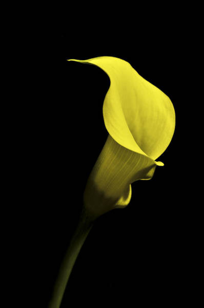 Photograph - Cala Lilly Vi by Ron White