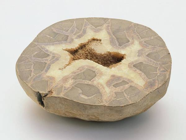 Cross Section Photograph - Calcite by Dorling Kindersley/uig