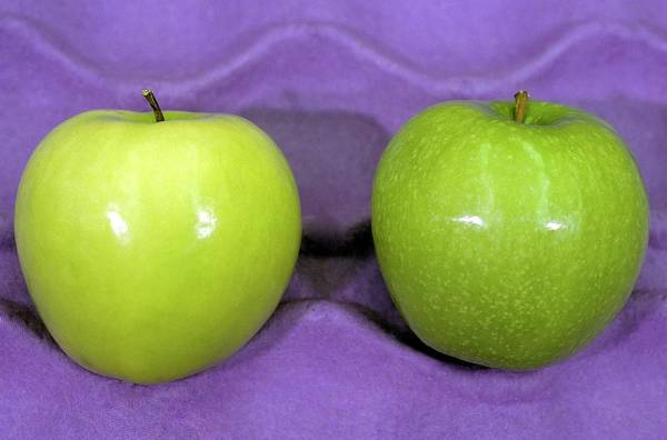 Malus Photograph - Calcium-treated And Untreated Apple by Bob Nichols/us Department Of Agriculture