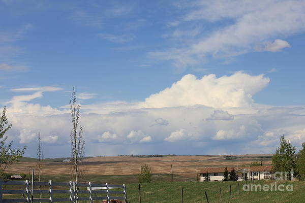 Photograph - Calgary Wild Country 2 by Donna L Munro