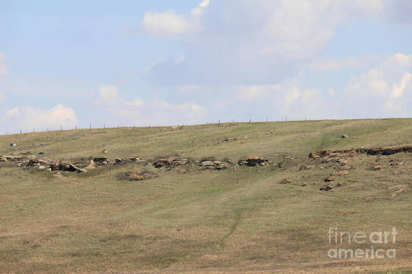 Photograph - Calgary Wild Country by Donna L Munro
