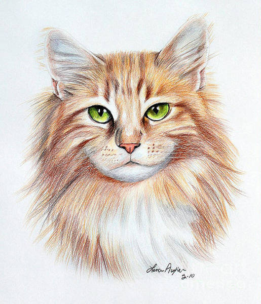 Calico Cat Wall Art - Drawing - Calico Cat by Lena Auxier