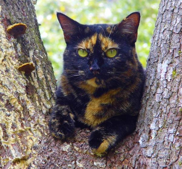 Photograph - My Calico Girl by D Hackett