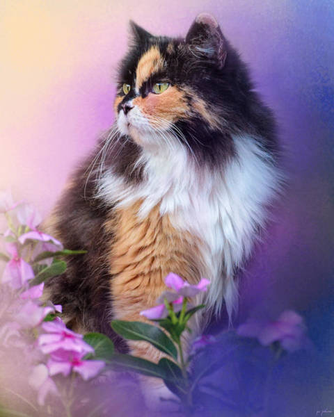 Long Hair Cat Photograph - Calico Kitty In The Garden by Jai Johnson