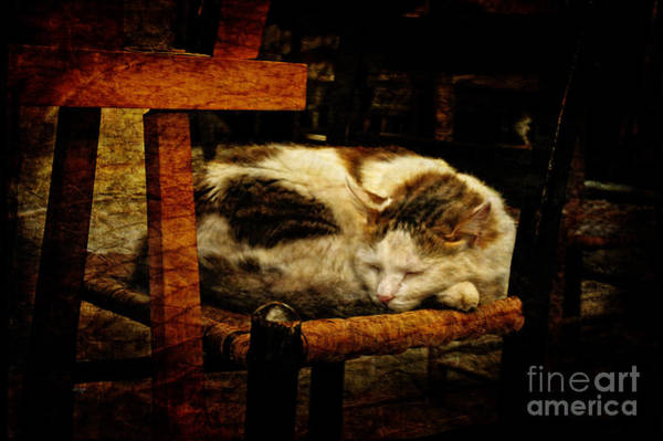 Photograph - Calico by Lois Bryan