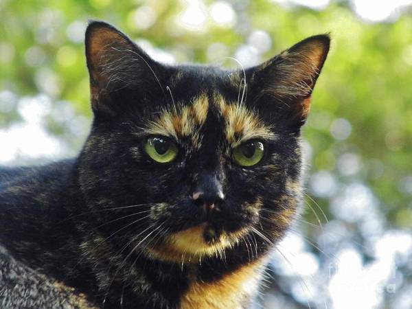 Photograph - Calico Smile by D Hackett