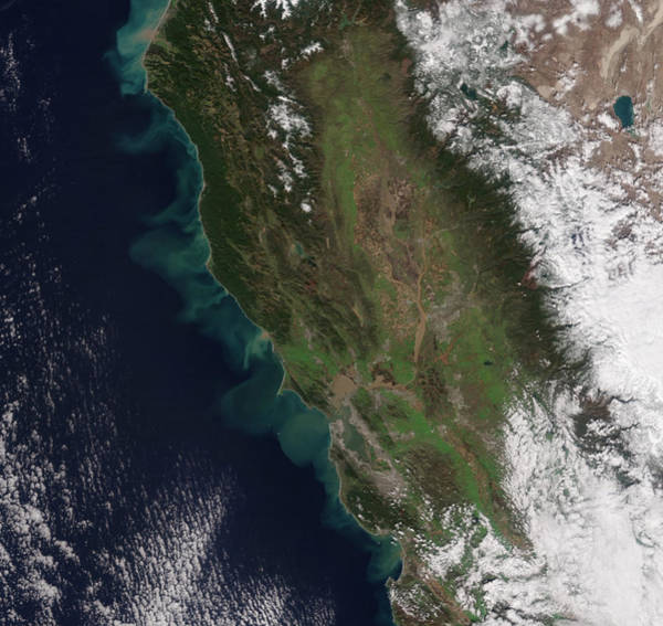 Suomi Photograph - California After Rain by Science Source