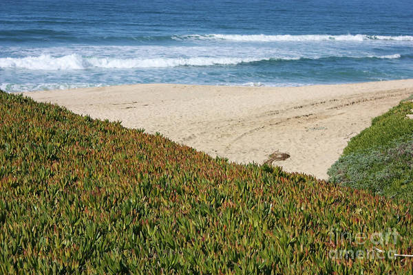 Photograph - California Beach With Ice Plant by Carol Groenen