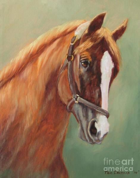 Kentucky Derby Wall Art - Painting - California Chrome by Tom Chapman