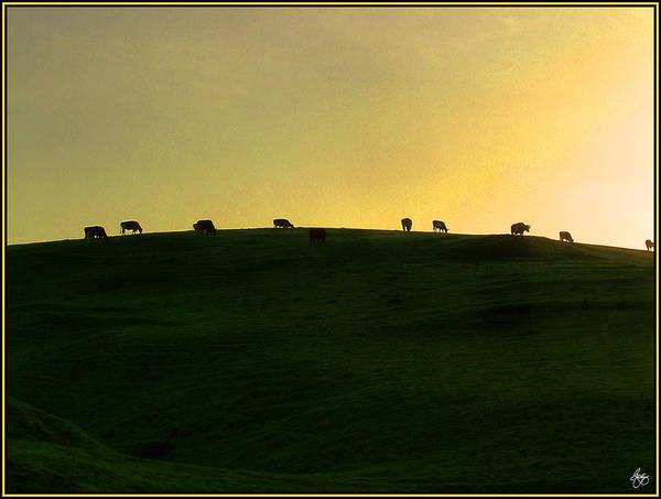 Photograph - California Coast Cows At Sunset by Wayne King
