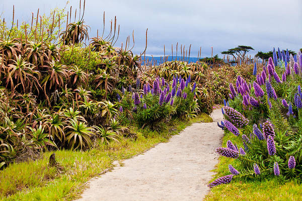 Photograph - California Coastline Path by Melinda Ledsome
