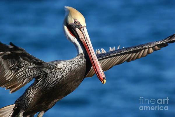 Photograph - Freedom In Blue by John F Tsumas