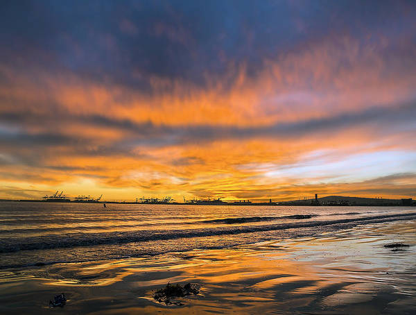 Photograph - California Gold by Denise Dube