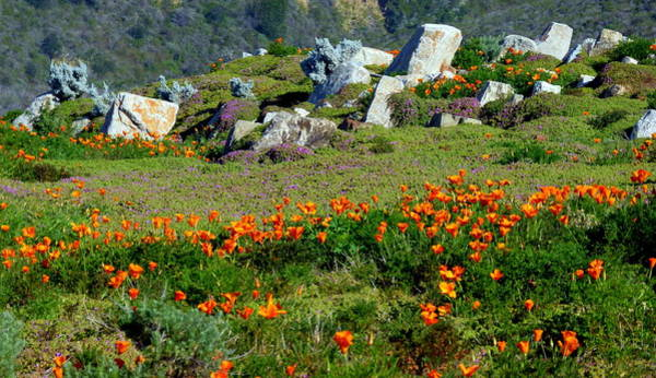 Photograph - California Golden Poppies by Jeff Lowe