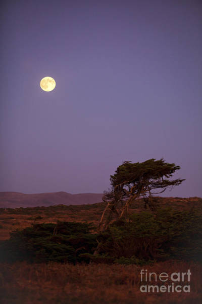 Nightime Photograph - California Moon by Diane Diederich