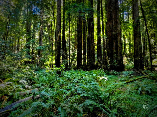 Photograph - California - Muir Woods 007 by Lance Vaughn