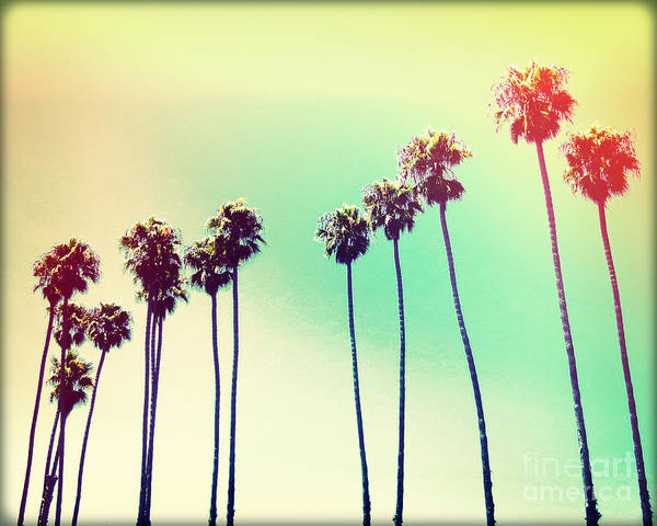 Wall Art - Photograph - California Palms IIi by Chris Andruskiewicz
