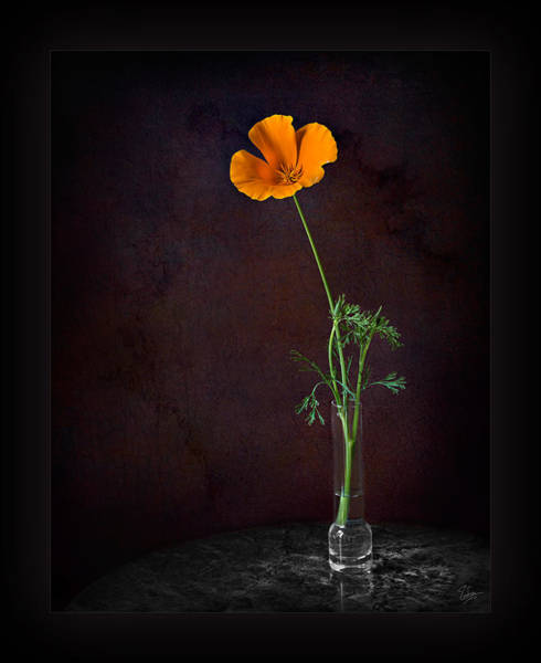 Photograph - California Poppy In Vase by Endre Balogh