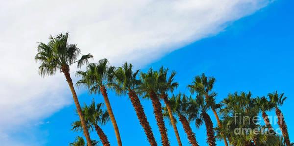 Wall Art - Photograph - California Swaying Palms by Angela J Wright