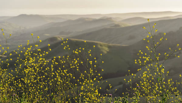 Photograph - California Wildflowers by Steven Sparks