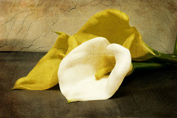Photograph - Calla Lilies by Beverly Stapleton
