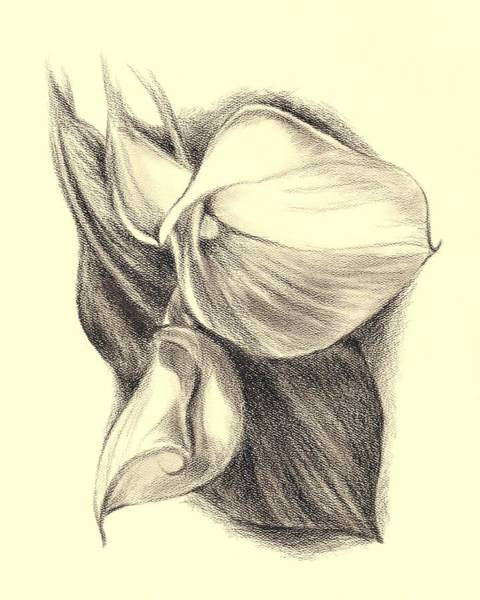 Drawing - Calla Lilies by MM Anderson