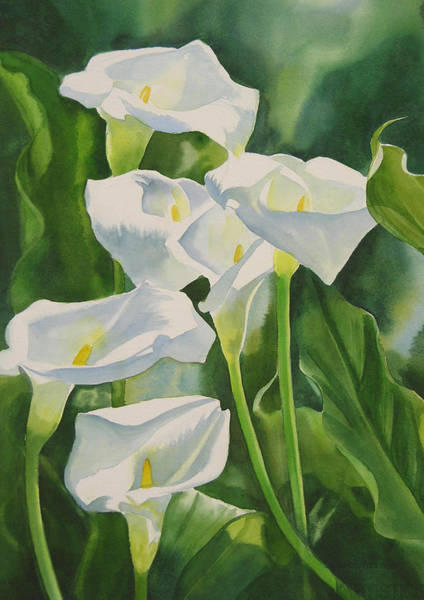 White Lily Painting - Calla Lilies by Sharon Freeman
