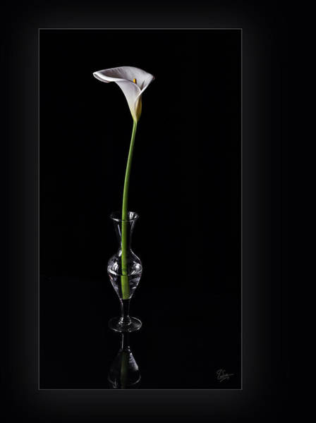 Photograph - Calla Lily In Vase by Endre Balogh
