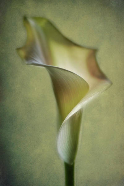 Filter Photograph - Calla Lily by Lotte Andersen