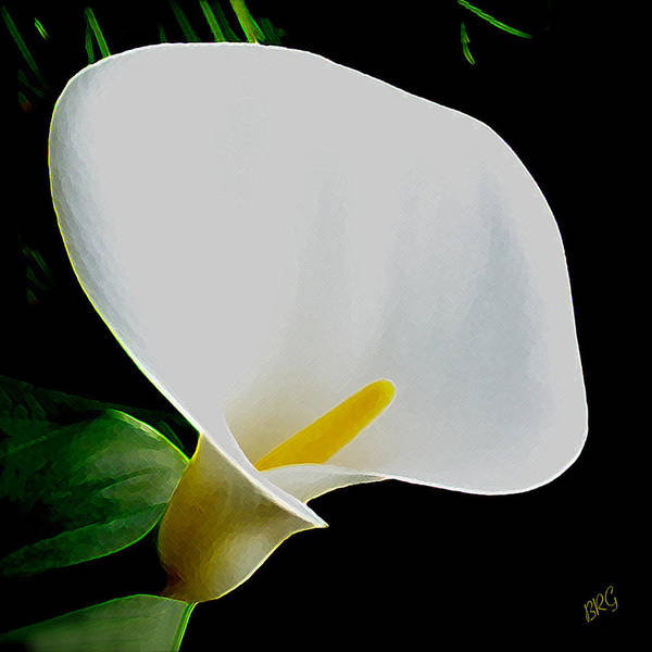 Photograph - Calla Lily Spectacular by Ben and Raisa Gertsberg