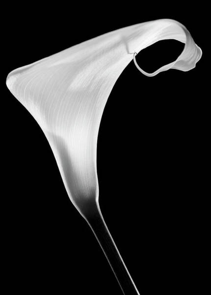 Wall Art - Photograph - Calla by Santiago Pascual Buye