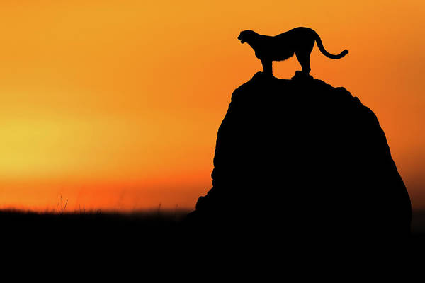 Tail Wall Art - Photograph - Calling For A Hunt by Faisal Alnomas