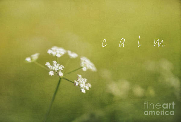 Hemlock Photograph - Calm by Elena Nosyreva