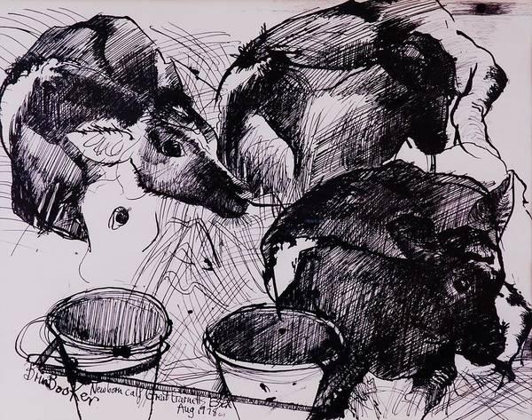 Newborn Photograph - Calves, Damp, Newborn, 1978 Pen & Ink On Paper by Brenda Brin Booker