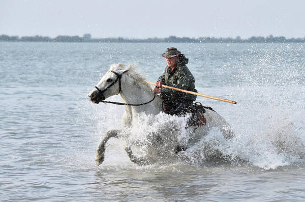 Adapted Photograph - Camargue Cowboy by Dr P. Marazzi