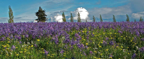 Port Townsend Photograph - Camas by Laurie Stewart