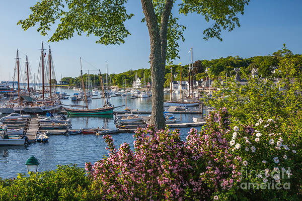 Photograph - Camden Harbor Spring by Susan Cole Kelly