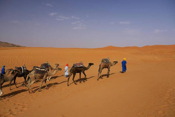 Photograph - Camel Caravan by Ivan Slosar
