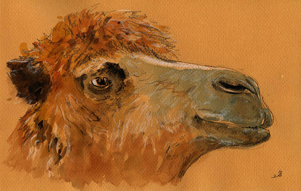 Camel Painting - Camel Head Study by Juan  Bosco