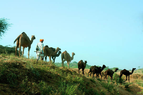 India Photograph - Camel Trail At Pushkar Cattle Fair by India Photography